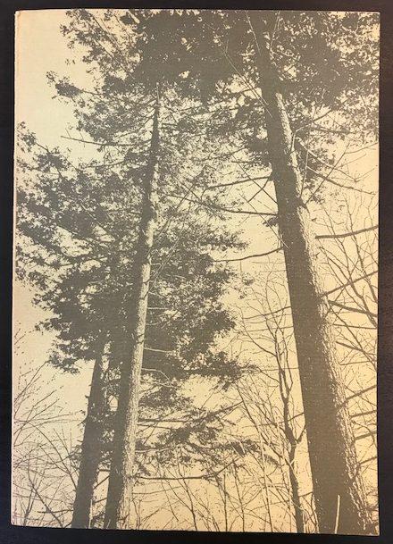 År og dag i skoven